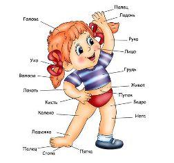 части тела на русском языке - девушка в трусиках